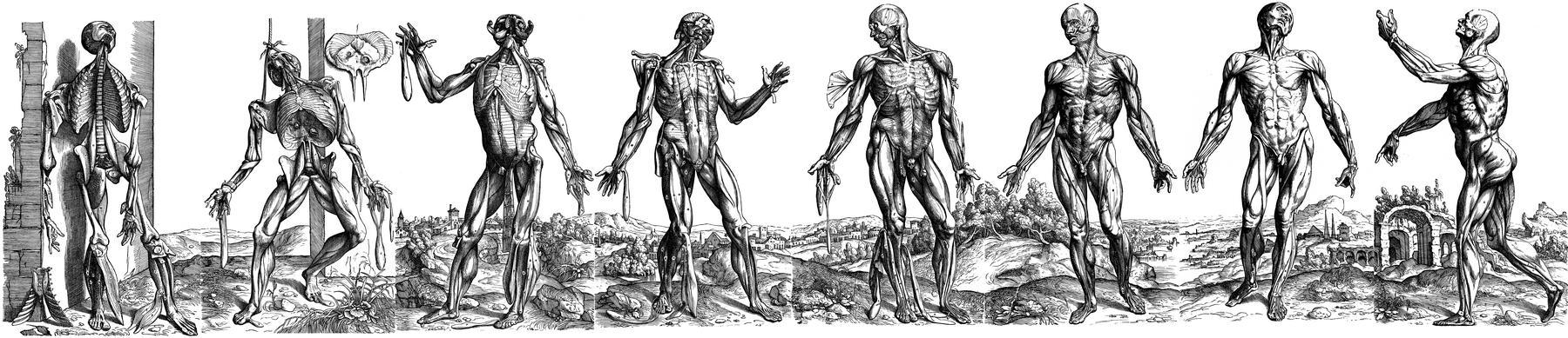 "The landscape panorama of Vesalius' ""Muscle Men"""